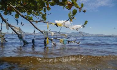 Retrato da Baía. Árvore no canto da Praia da Bica guarda os resíduos trazidos pela maré nas águas da Baía de Guanabara Foto: marcelodejesus / Agência O Globo