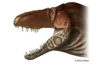 O Daspletossauro de Horner e os tiranossauros tinham pele protetora no focinho e nas laterais da mandíbula Foto: DIVULGAÇÃO