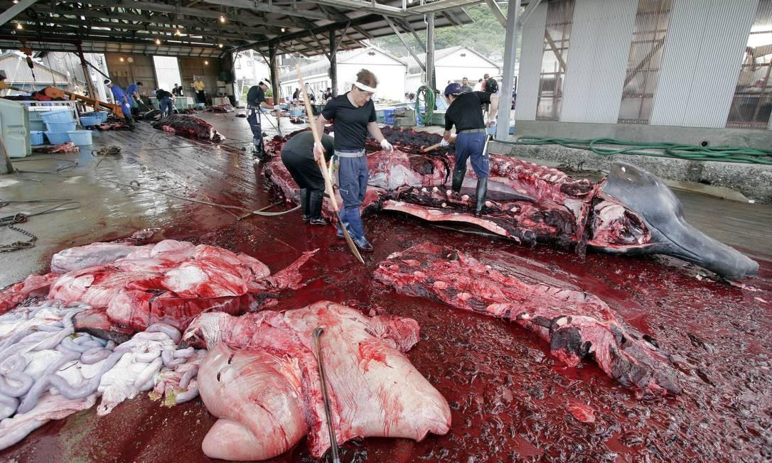 Pescadores abatem baleia em Chiba, a leste de Tóquio, em foto de 2007 Foto: Yoshikazu Tsuno / AFP PHOTO
