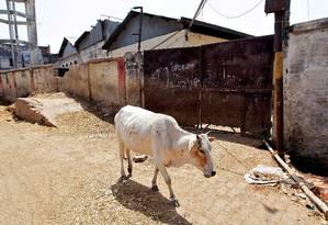 Vaca anda pelas ruas de Allahabad, na Índia Foto: JITENDRA PRAKASH / REUTERS