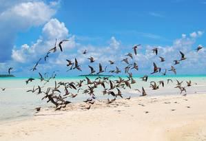 Aves na ilha onde funciona o hotel The Brando, na Polinésia Francesa, reconhecido por práticas de sustentabilidade e ecologia. Foto: Divulgação