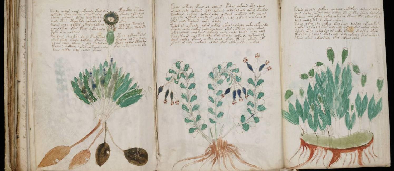 Ilustrações botânicas do famoso manuscrito de Voynich: idioma desconhecido Foto: Reprodução / Agência O GLOBO