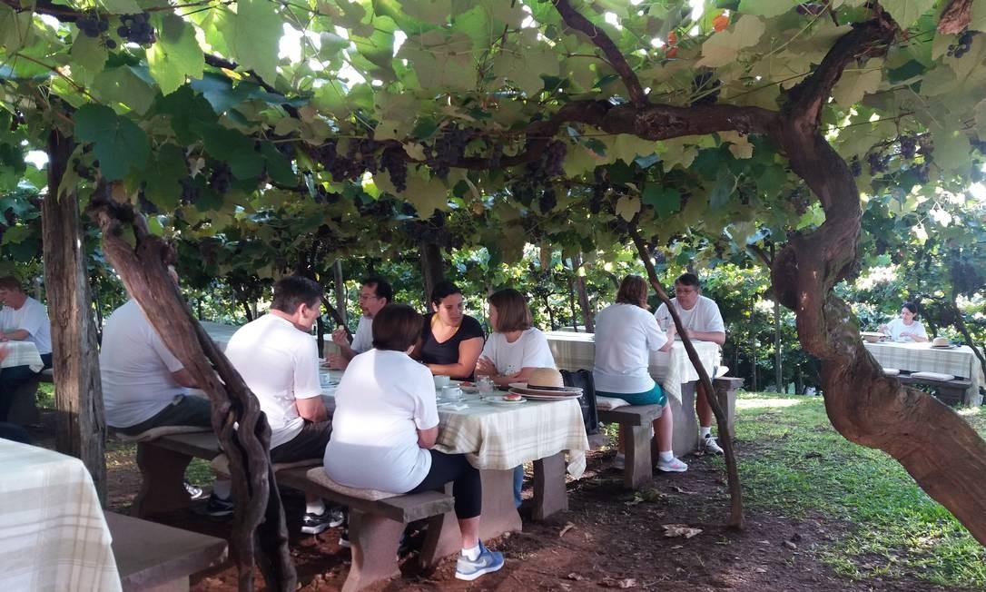 A programação começa com um café da manhã servido sob o parreiral centenário da sede da vinícola Foto: Eduardo Maia / O Globo