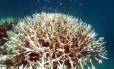 O aquecimento das águas faz com que os corais expulsem as microalgas coloridas que vivem neles