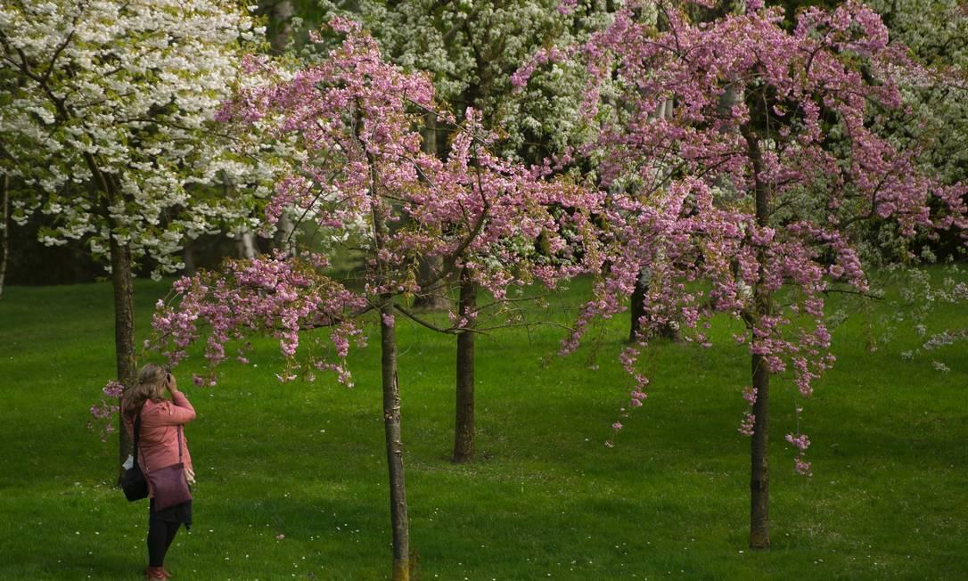 Árvores dos mais variados gêneros florescem na área dedica à International Garden Exhibition (IGA) 2017 no Gaerten der Welt em Berlim STEFFI LOOS / AFP