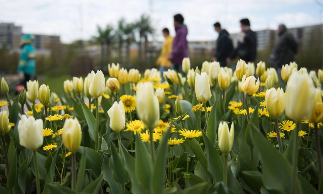 Margaridas e tulipas entre os jardins International Garden Exhibition (IGA) 2017, que fica até 15 de outubro em no Gaerten der Welt em Berlim STEFFI LOOS / AFP