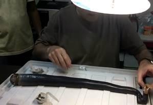 O Kuphus polythalamia pode alcançar até 1,5 metro de comprimento Foto: Universidade de Utah