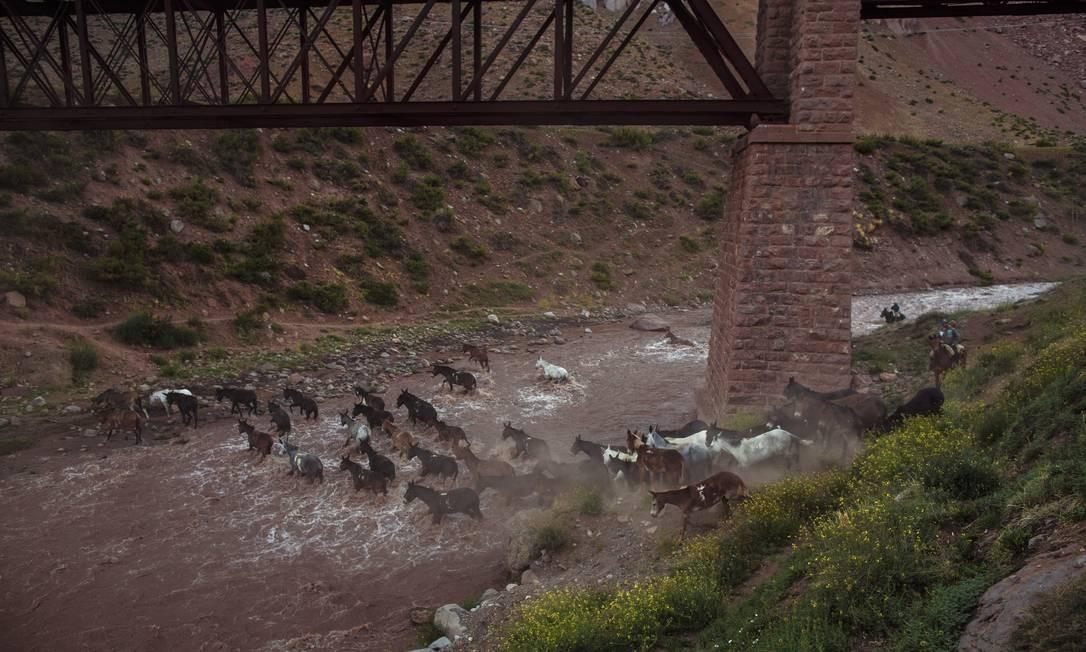 Nas proximidas do Aconcágua, ao lado do cemitério do Andinista, Arrieros, os que tocam as mulas com suprimentos para quem escalara a montanha, podem ser vistos nas margens da rodovia Foto: Daniel Marenco / Agência O Globo