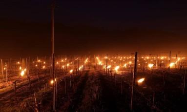 Tochas utitilizadas por vinicultores para conter geada Foto: AP