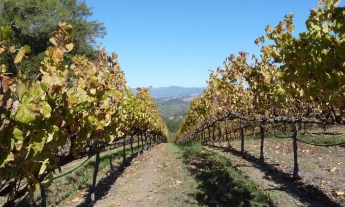 Vinhos da Califórnia Foto: Paulo Motta/Arquivo