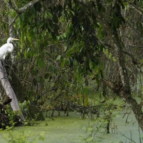 Área de Mata Atlântica no Rio: bioma é um dos que pesquisa aponta que crescimento e absorção de carbono vão aumentar junto com alta na temperatura e chuva Foto: Thiago Freitas