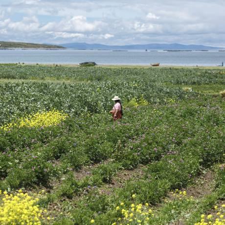 Plantações às margens do lago Titicaca impressionam Foto: Daniel Marenco / Agência O Globo