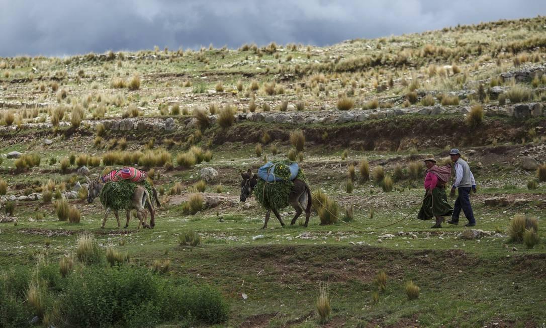 No altiplano peruano campesinos podem ser vistos em suas lidas de campo a todo momento Foto: Daniel Marenco / Agência O Globo