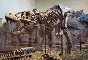 Fósseis do T. Rex são exibidos no Museu de História Natural de Carnegie, nos EUA Foto: Wikimedia Commons / ScottRobertAnselmo