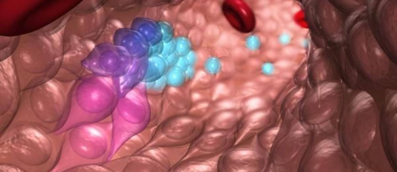 Ilustração mostra células-tronco hematopoiéticas e progenitoras de células sanguíneas (ambas em azul) emergindo do endotélio hemogênico em meio a hemácias, as células vermelhas do sangue, durante o desenvolvimento embrionário normal: cientistas estão tentando replicar processo em laboratório Foto: Digvulgação/O'Reilly Science Art