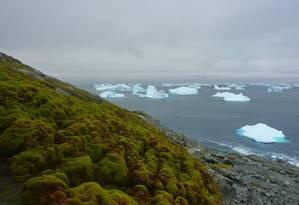 Musgos ocupam a paisagem da Ilha Verde Foto: Divulgação / Matt Amesbury