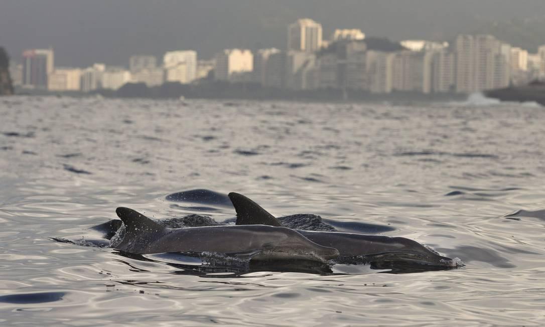 Entre os animais há um filhote recém-nascido, sempre ao lado da mãe Foto: Márcia Foletto / Agência O Globo