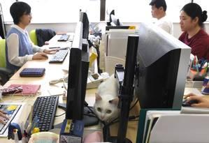 Gato anda em meio a funcionários de empresa de informática em Tóquio Foto: YOKO AKIYOSHI / AFP/ AFPBB News