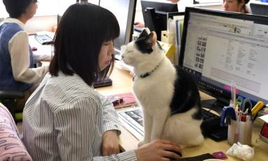 A Ferray aposta em gatos para aliviar o estresse no escritório Foto: YOKO AKIYOSHI / AFP/AFPBB News
