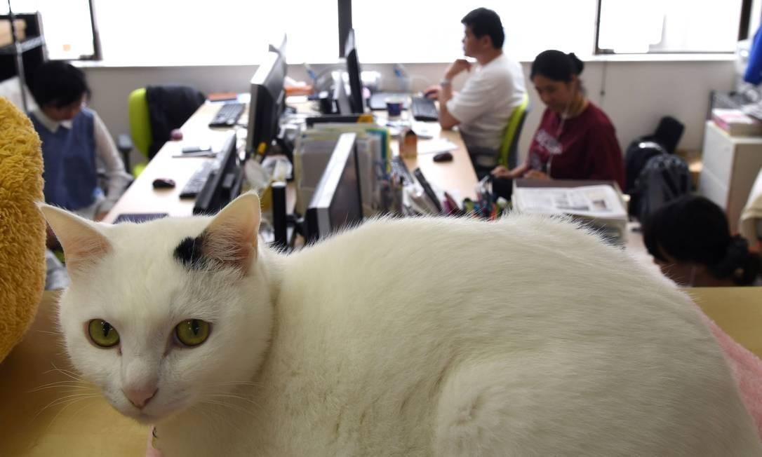 Na empresa de informática, 'reforço' animal começou em 2000 Foto: YOKO AKIYOSHI / AFP