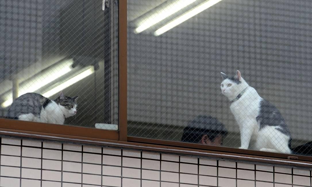 Gatos olham para o exterior do escritório da Ferray Foto: YOKO AKIYOSHI / AFP