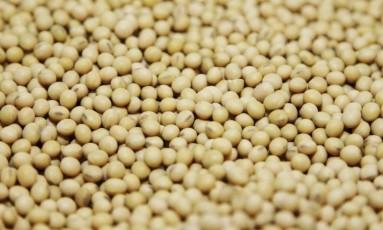 Grãos de soja Foto: Tom Gannam / Reuters