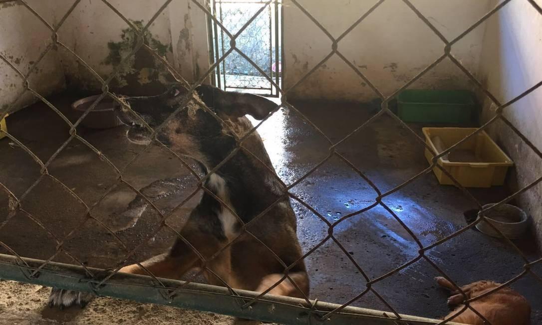 Protetores relatam mau cheiro no local Foto: Divulgação