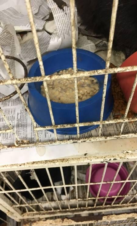 Na foto, uma gaiola com água misturada com ração, e a outra com recepiente virado Foto: Divulgação