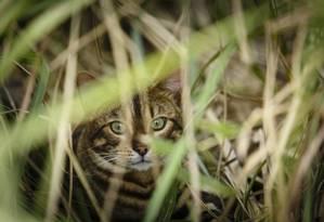Mais de 200 gatos foram mortos em Saint Pierre la Mer Foto: Fernando Lemos / Agência O Globo