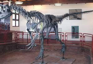 O esqueleto de um alossauro descoberto no cemitério de dinossauros de Cleveland-Lloyd Foto: WIKIPÉDIA