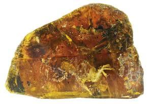 Filhote de pássaro que viveu há cem milhões de anos foi preservado em âmbar Foto: Gondwana Research / Lida Xing