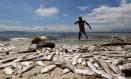 Peixes mortos nas margens da Ilha do Governador Foto: Pablo Jacob