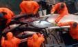 Por causa da sobrepesca, os estoques de atum estão ameaçados Foto: AFP