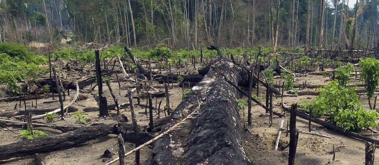 Retrocesso: ambientalistas acusam medidas provisórias que podem reduzir áreas protegidas da Amazônia Foto: Antônio Scorza