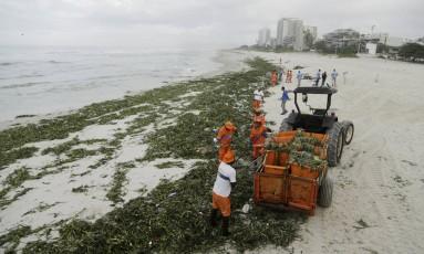Funcionários da Comlurb recolhem as gigogas da areia da Praia da Barra Foto: Gabriel de Paiva / Agência O Globo