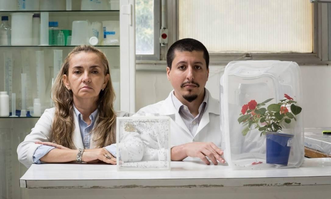 Georgia e Rodrigo com amostras das flores e dos mosquitos 'Aedes aegypti' estudados Foto: Fernando Lemos
