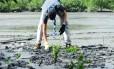Escoteiro realizando o replantio de mudas no manguezal na Ilha das Flores