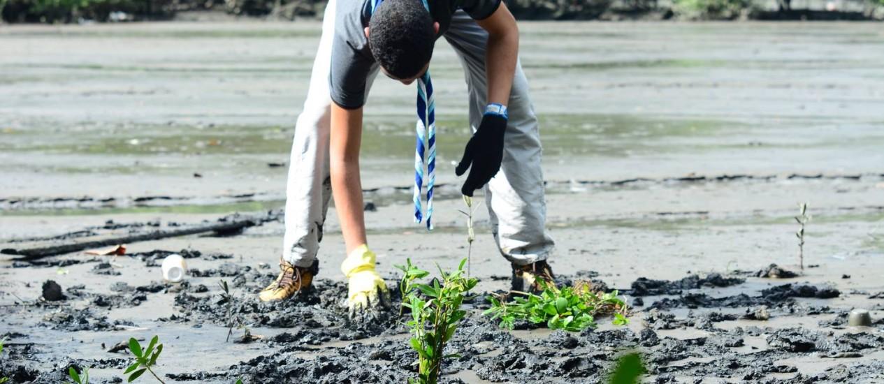 Escoteiro realizando o replantio de mudas no manguezal na Ilha das Flores Foto: Marcio Oliveira / Divulgação