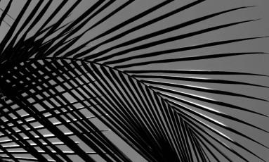 Fotografia de Peter Gabriel Wrede sem título (2017), uma das obras à venda no Leilão Fanfarrão Foto: Divulgação