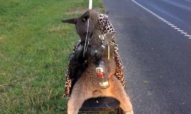 Canguru foi encontrado amarrado a uma cadeira com uma garrafa de bebida alcoólica entras as patas Foto: HANDOUT / AFP