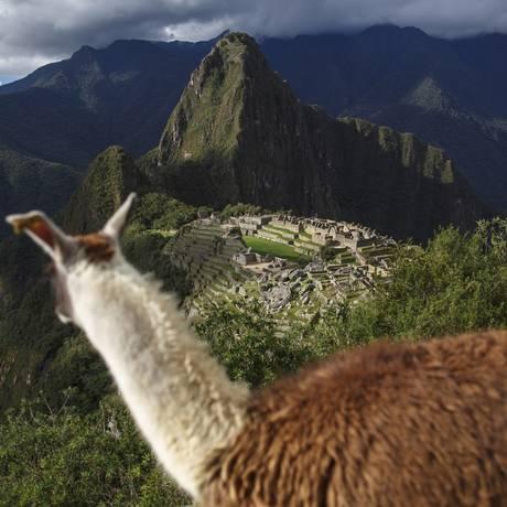 Lhama observa a cidade inca de Machu Picchu, no Peru Foto: Daniel Marenco / Agência O Globo