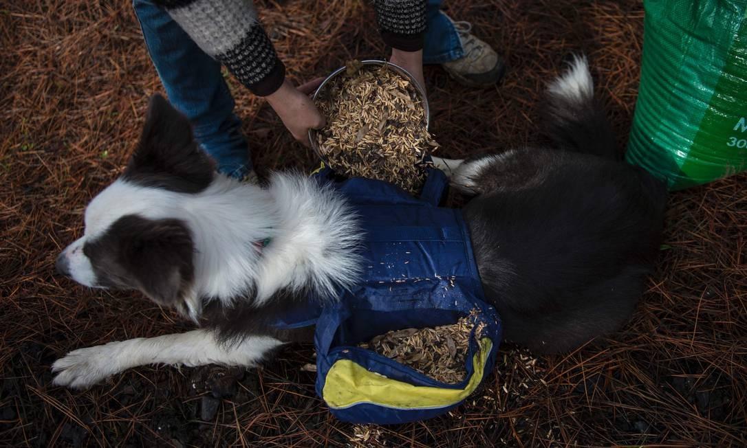 As bolsas são enchidas com sementes de árvores e plantas nativas Foto: MARTIN BERNETTI / AFP