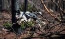 Enquanto correm, os cachorros espalham sementes que carregam em bolsas Foto: MARTIN BERNETTI / AFP
