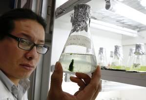 Pesquisadores chilenos desenvolveram técnica para produzir biocombustíveis a partir de microalgas Foto: RODRIGO GARRIDO / REUTERS