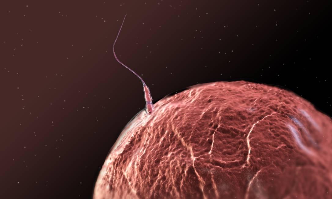 Ilustração mostra espermatozoide fertilizando um óvulo: produção retomada Foto: Science Photo Library