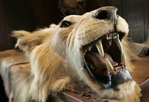 Populações de animais são afetadas pela ação humana, como a caça Foto: Kathy Willens / AP