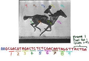 Os pesquisadores traduziram cada pixel das imagens em sequências genéticas Foto: Wyss Institute at Harvard University