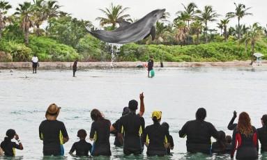 The Dolphins Cay, atração com golfinhos do Atlantis Resort, Paradise Island, nas Bahamas Foto: André Coelho / Agência O Globo/ 18.7.2013