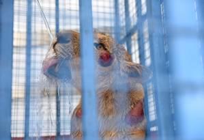 Entre os animais resgatados, uma leoa estava particularmente ferida. Na imagem, ela recebe água Foto: AHU SAVAN AN / AFP