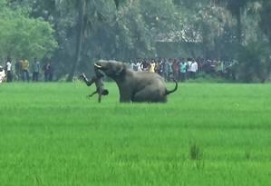 Foto tirada em março de 2016 mostra um elefante atacando um homem no distrito de Burdwan, na Índia Foto: STR / AFP